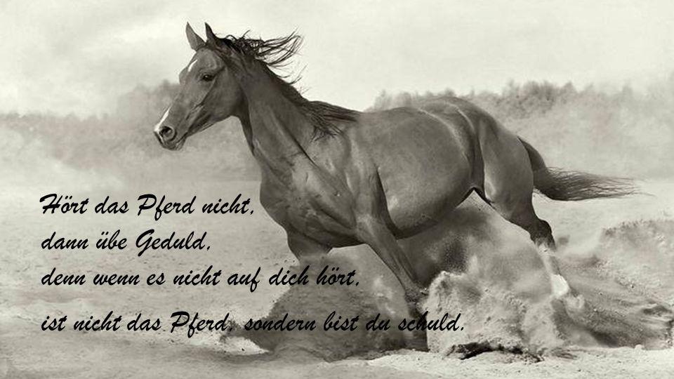Hört das Pferd nicht, dann übe Geduld, denn wenn es nicht auf dich hört, ist nicht das Pferd, sondern bist du schuld.