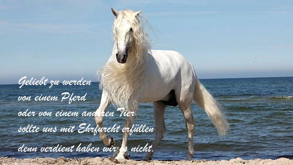 Geliebt zu werden von einem Pferd oder von einem anderen Tier sollte uns mit Ehrfurcht erfüllen denn verdient haben wir es nicht.