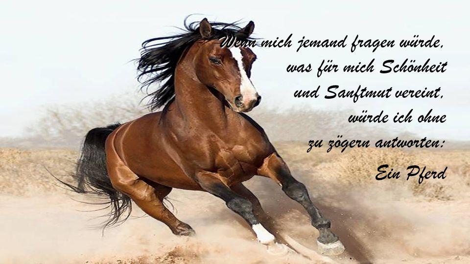 Wenn mich jemand fragen würde, was für mich Schönheit und Sanftmut vereint, würde ich ohne zu zögern antworten: Ein Pferd