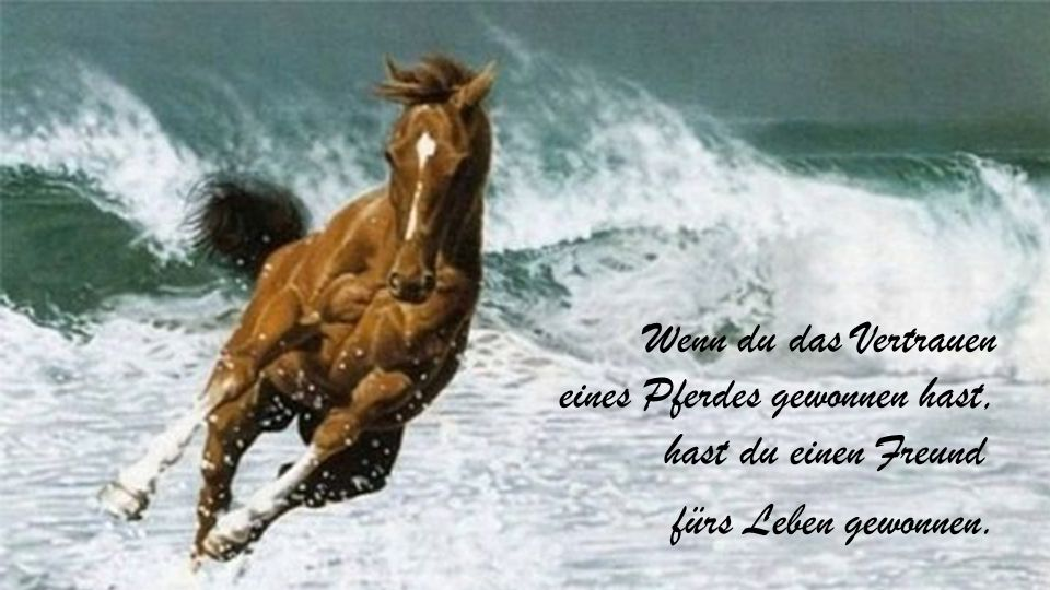 Wenn du das Vertrauen eines Pferdes gewonnen hast, hast du einen Freund fürs Leben gewonnen.