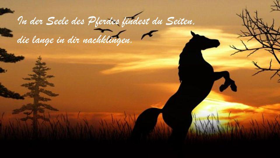 In der Seele des Pferdes findest du Seiten, die lange in dir nachklingen.