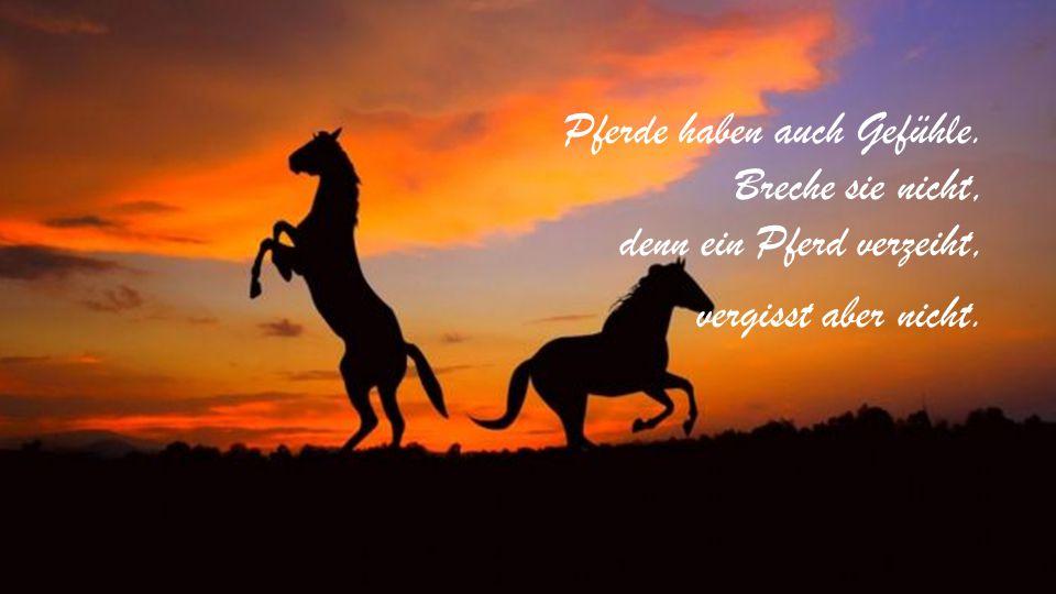 Pferde haben auch Gefühle