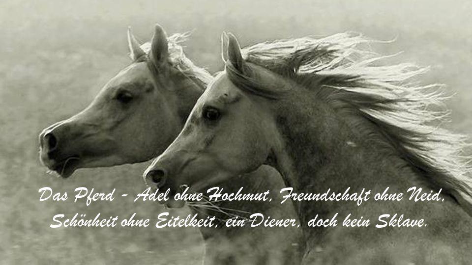 Das Pferd - Adel ohne Hochmut, Freundschaft ohne Neid, Schönheit ohne Eitelkeit, ein Diener, doch kein Sklave.