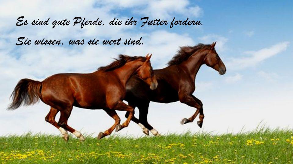 Es sind gute Pferde, die ihr Futter fordern