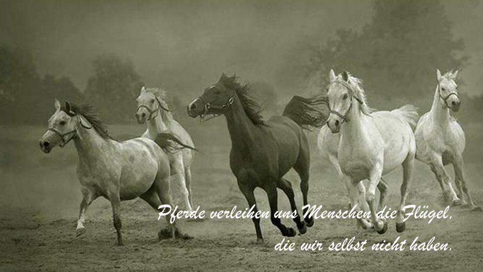 Pferde verleihen uns Menschen die Flügel, die wir selbst nicht haben.