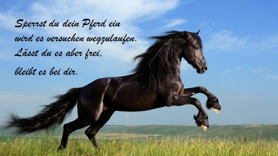 Sperrst du dein Pferd ein wird es versuchen wegzulaufen