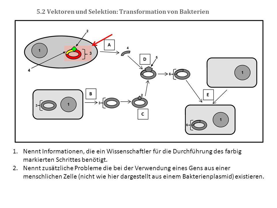 Nennt Informationen, die ein Wissenschaftler für die Durchführung des farbig markierten Schrittes benötigt.