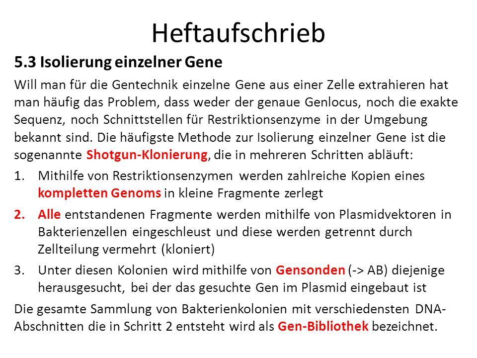 Heftaufschrieb 5.3 Isolierung einzelner Gene
