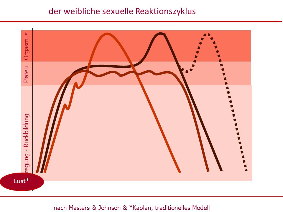 der weibliche sexuelle Reaktionszyklus