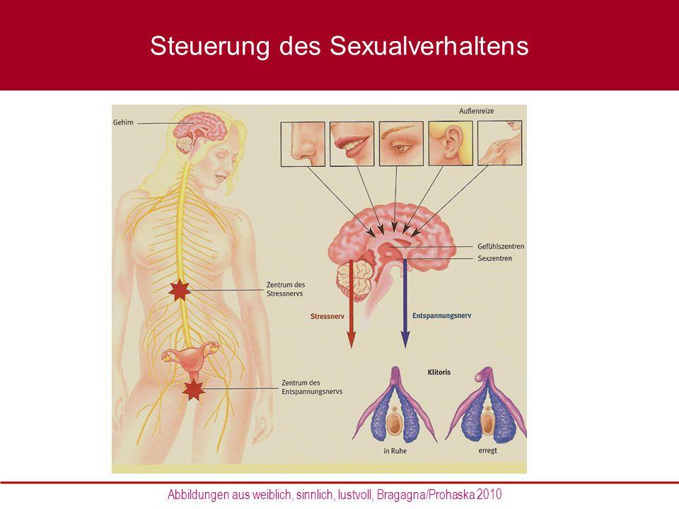 Steuerung des Sexualverhaltens