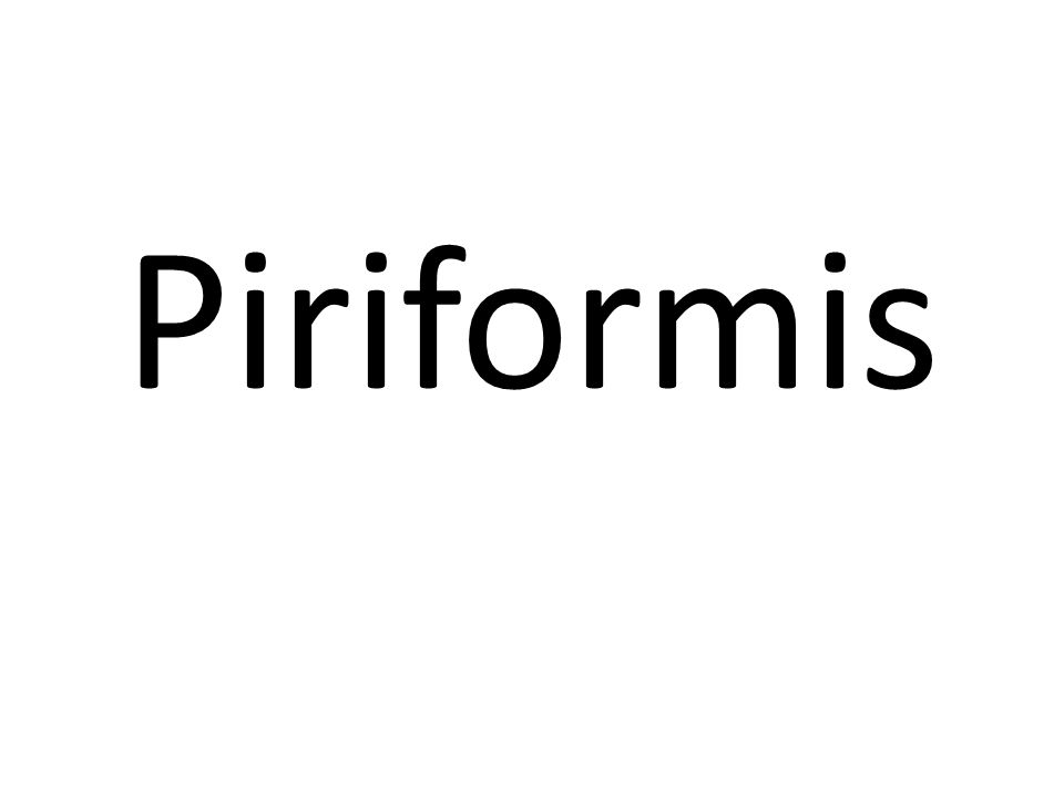 Piriformis