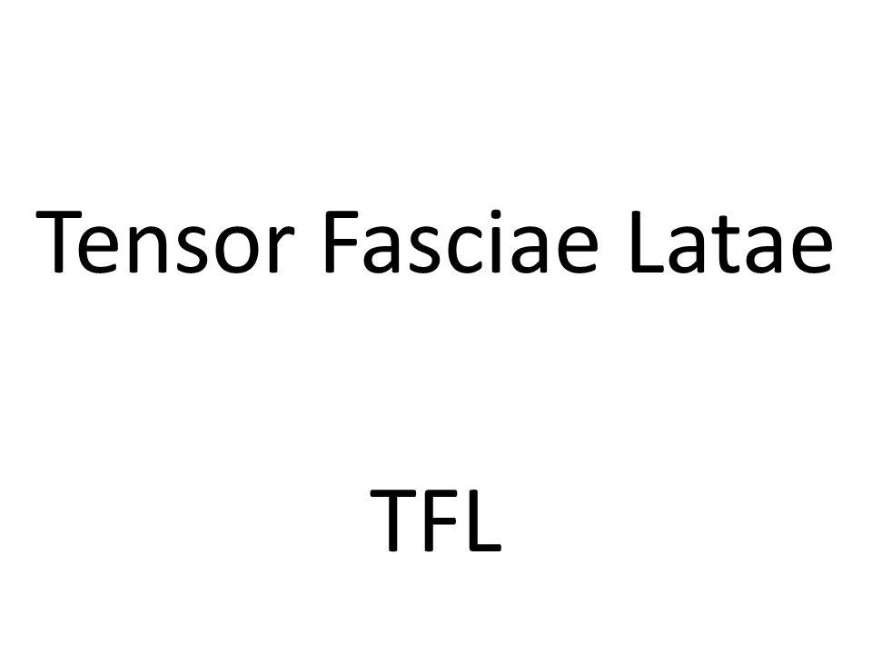 Tensor Fasciae Latae TFL