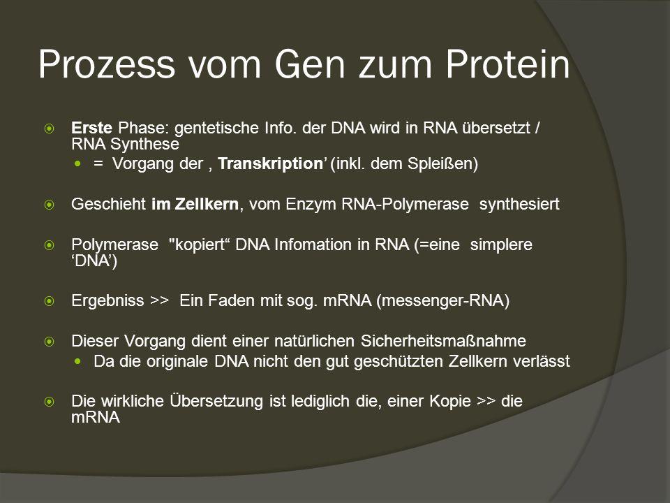 Prozess vom Gen zum Protein