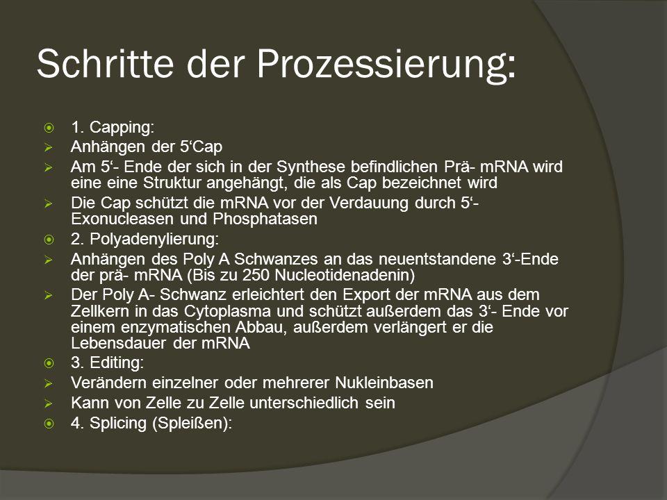 Schritte der Prozessierung: