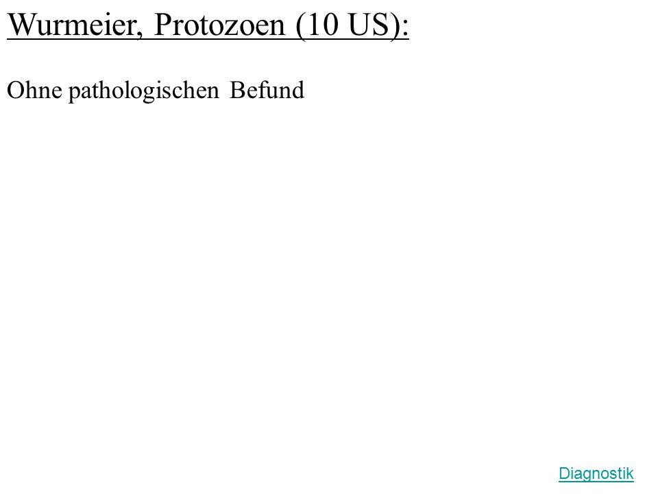 Wurmeier, Protozoen (10 US):