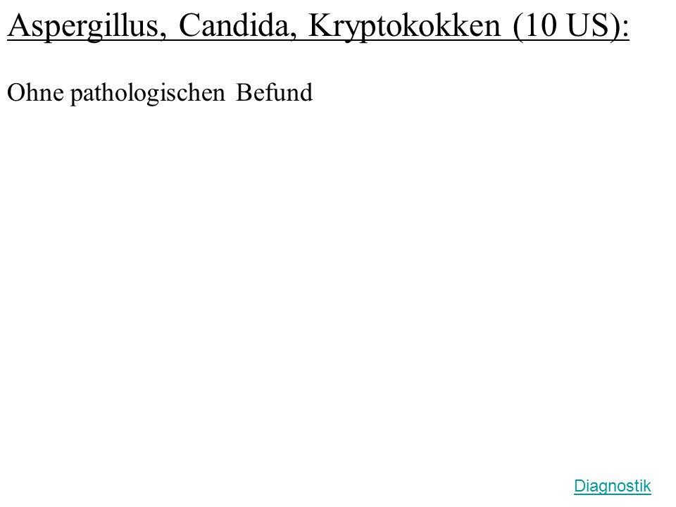 Aspergillus, Candida, Kryptokokken (10 US):