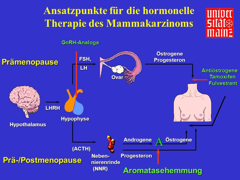 Ansatzpunkte für die hormonelle Therapie des Mammakarzinoms