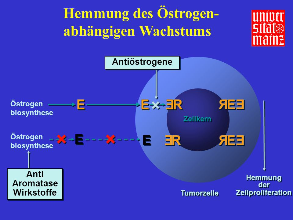 der Zellproliferation