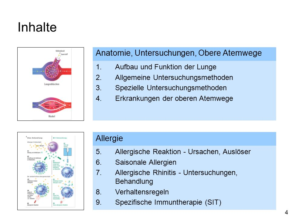 Inhalte Anatomie, Untersuchungen, Obere Atemwege Allergie