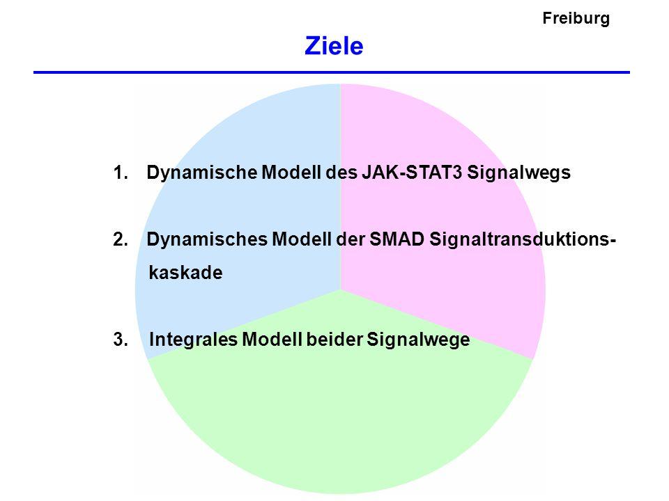 Ziele Freiburg Dynamische Modell des JAK-STAT3 Signalwegs