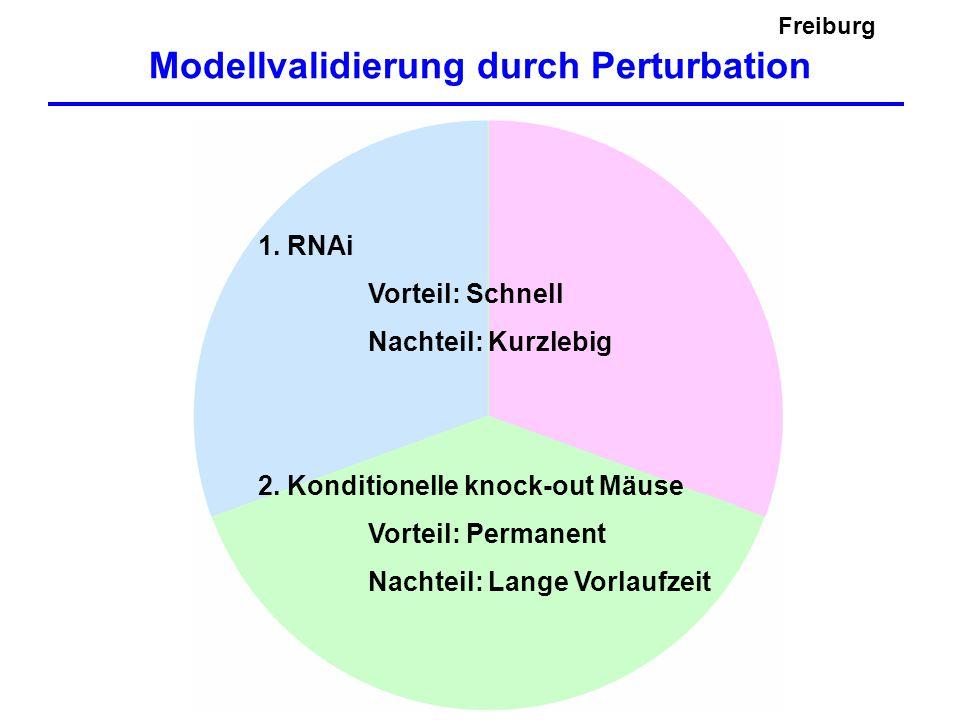 Modellvalidierung durch Perturbation