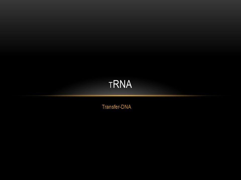 trnA Transfer-DNA