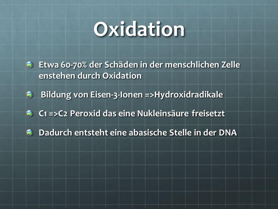 Oxidation Etwa 60-70% der Schäden in der menschlichen Zelle enstehen durch Oxidation. Bildung von Eisen-3-Ionen =>Hydroxidradikale.