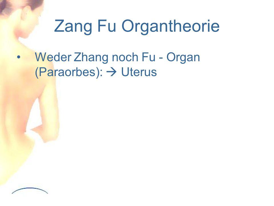 Zang Fu Organtheorie Weder Zhang noch Fu - Organ (Paraorbes):  Uterus