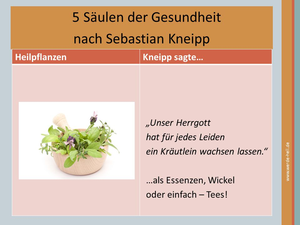 5 Säulen der Gesundheit nach Sebastian Kneipp Heilpflanzen