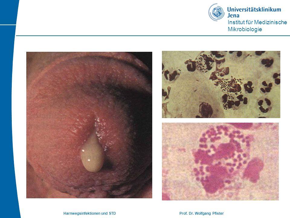 Harnwegsinfektionen und STD Prof. Dr. Wolfgang Pfister