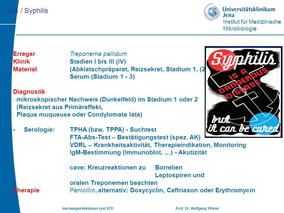 Lues / Syphilis Erreger Treponema pallidum