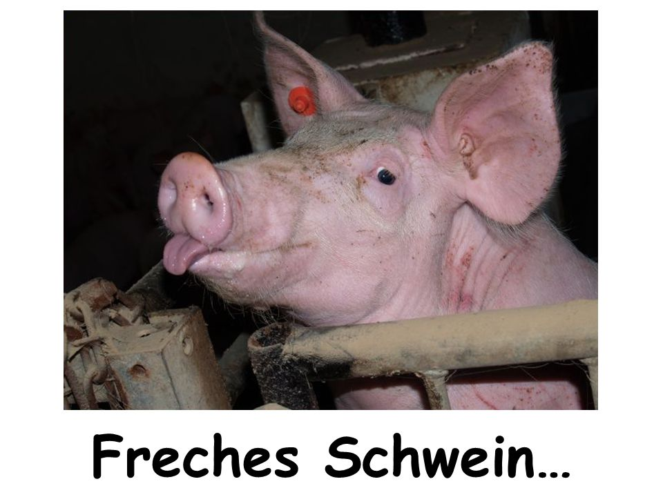 Freches Schwein…