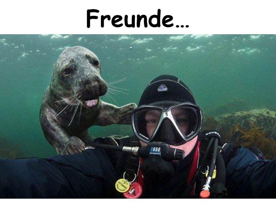 Freunde…