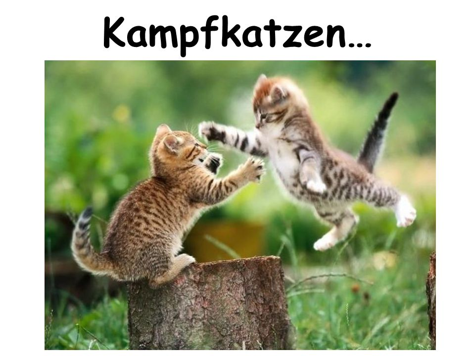 Kampfkatzen…