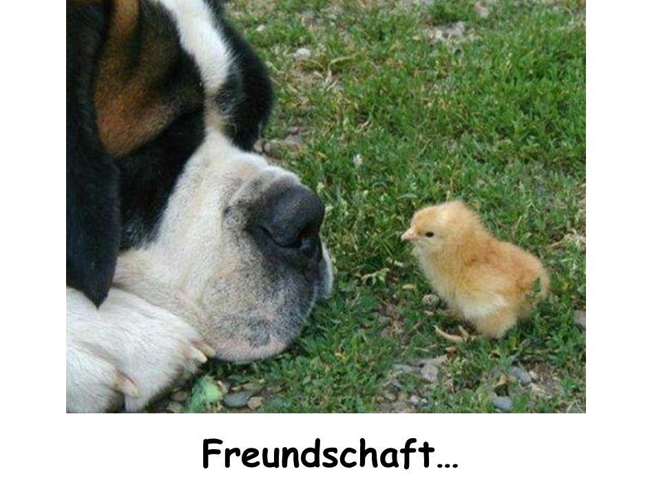 Freundschaft…