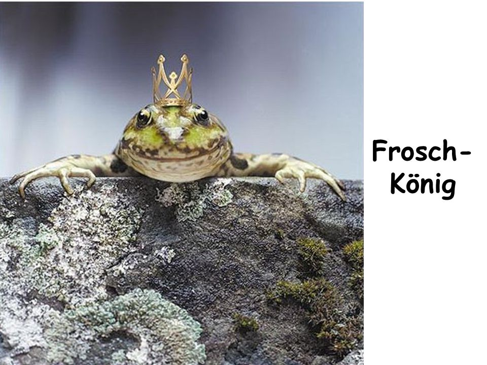 Frosch- König