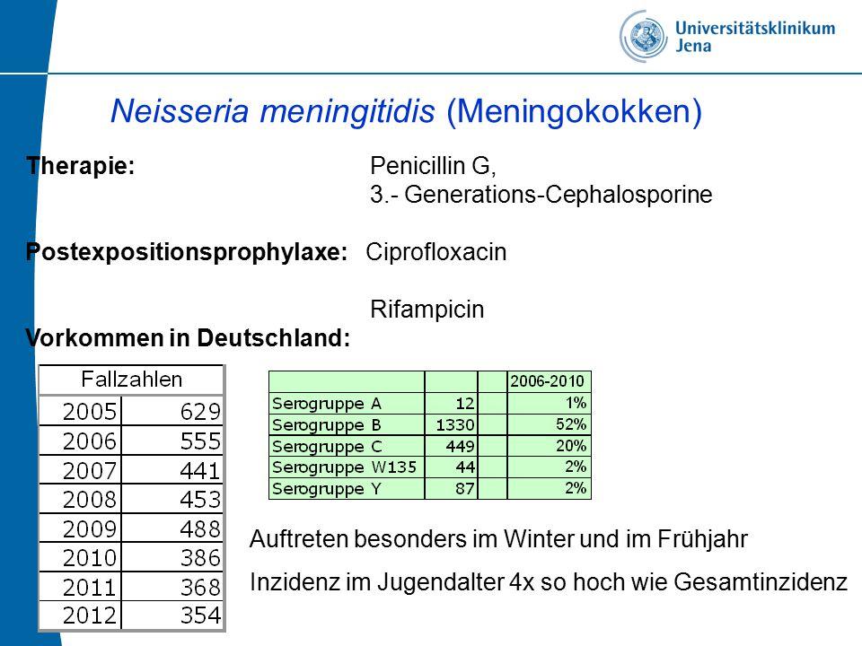Neisseria meningitidis (Meningokokken)