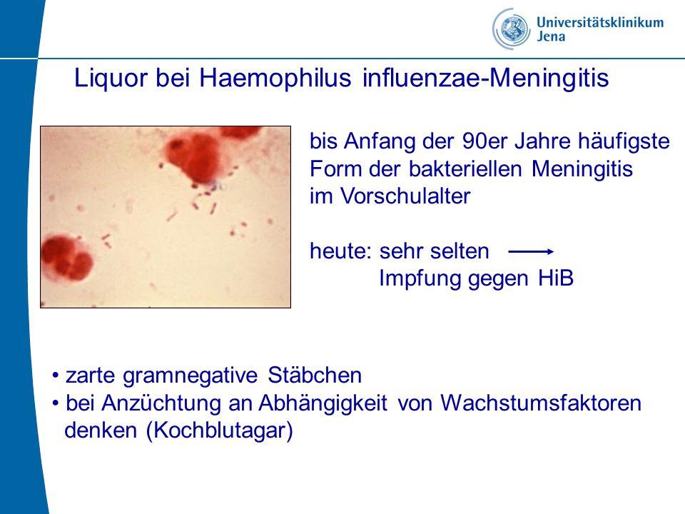 Liquor bei Haemophilus influenzae-Meningitis