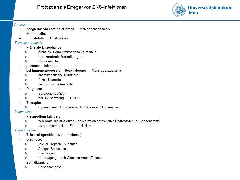 Protozoen als Erreger von ZNS-Infektionen