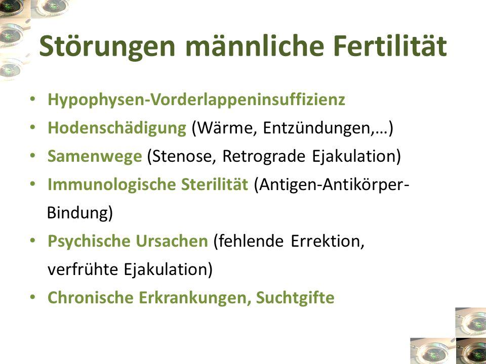 Störungen männliche Fertilität