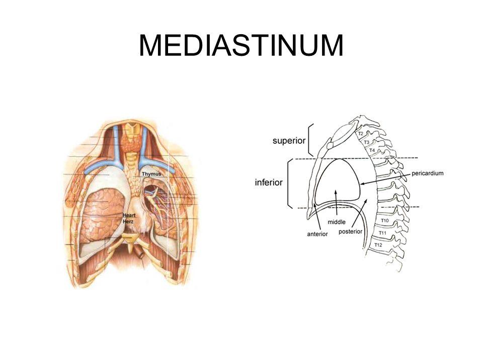 Ziemlich Mediastinalen Lymphknoten Fotos - Menschliche Anatomie ...