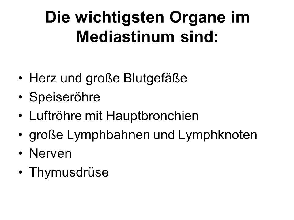 Die wichtigsten Organe im Mediastinum sind: