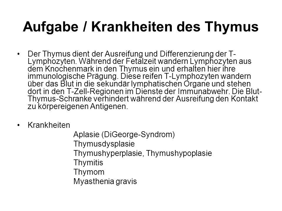Aufgabe / Krankheiten des Thymus