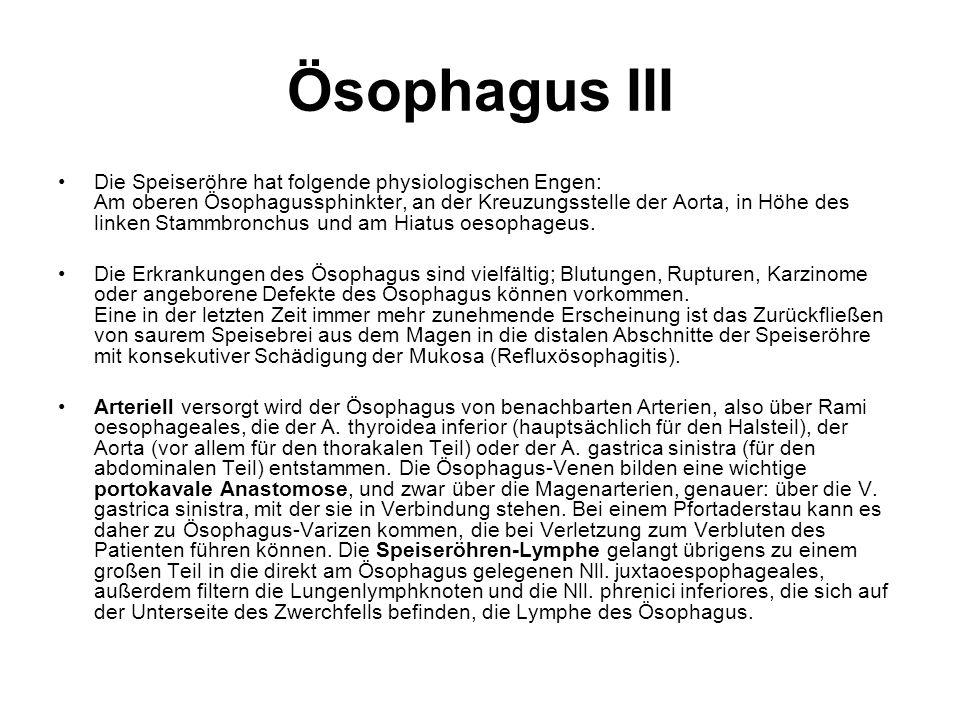Ösophagus III