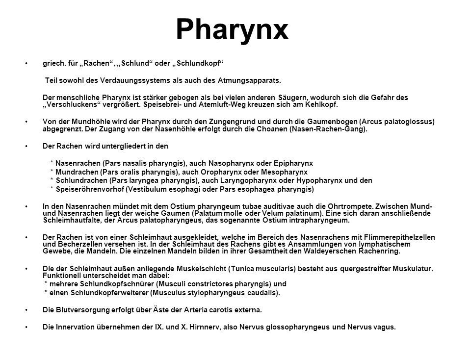 """Pharynx griech. für """"Rachen , """"Schlund oder """"Schlundkopf"""