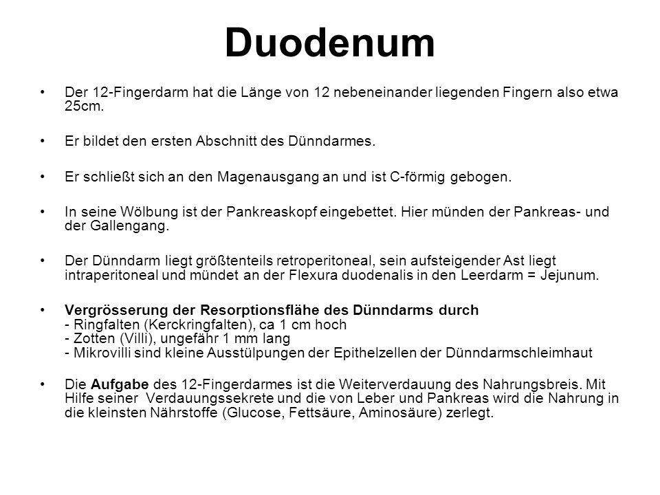 Duodenum Der 12-Fingerdarm hat die Länge von 12 nebeneinander liegenden Fingern also etwa 25cm. Er bildet den ersten Abschnitt des Dünndarmes.