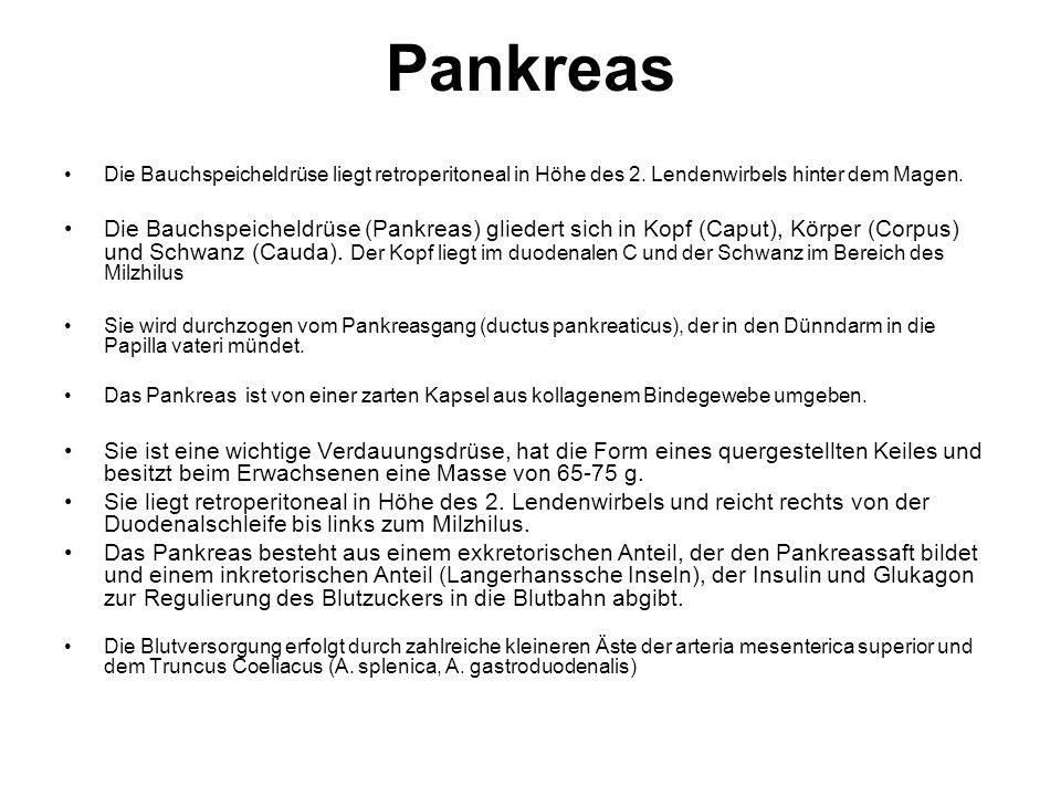 Pankreas Die Bauchspeicheldrüse liegt retroperitoneal in Höhe des 2. Lendenwirbels hinter dem Magen.