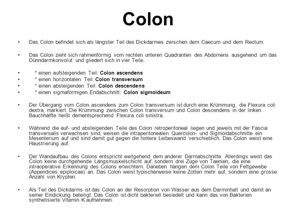 Colon Das Colon befindet sich als längster Teil des Dickdarmes zwischen dem Caecum und dem Rectum.