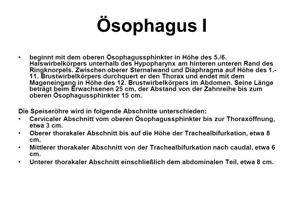 Ösophagus I