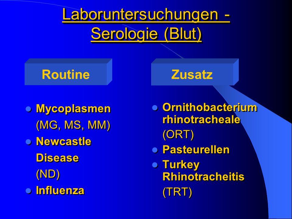 Laboruntersuchungen - Serologie (Blut)
